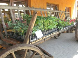 Jungpflanzen in Dresden kaufen
