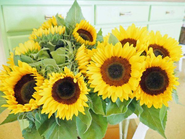 Sonnenblumen kaufen